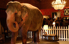 elephant in the room by j_garg