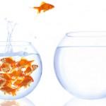 goldfish-taking-action
